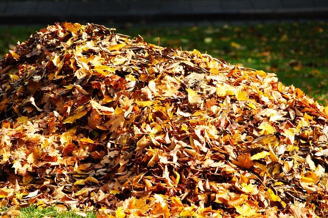 blog Leaf Pile