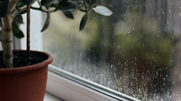 blog Rainy Day (3)