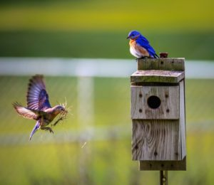 blog animals-avian-beaks-birdhouse-1156507