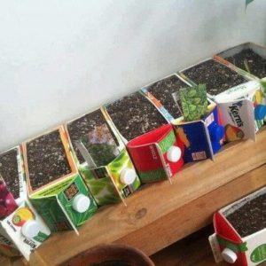 Earth Day Projects Juice Seed Starter