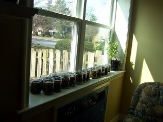 Earth Day Seed Starters Mason Jars
