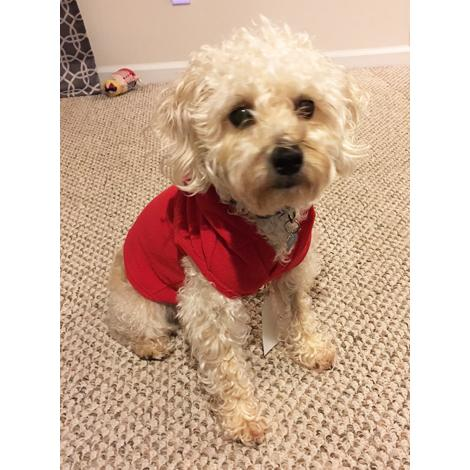 Big Feet Pajamas Red Fleece Hooded Sweater For Dogs d1e482587