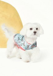 "Bedhead ""Cafe du Paris"" Stretch Doggy Pajama"