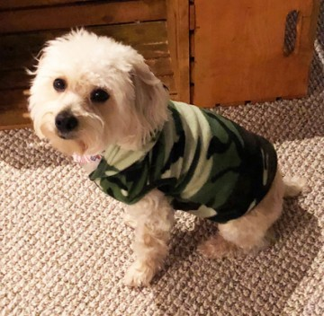 Big Feet Pajamas Green Camouflage Fleece Hooded Sweater for Dogs
